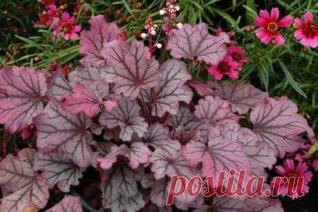 Цветы и декоративные растения с красными листьями – фото, названия, уход | Цветники и клумбы (Огород.ru)