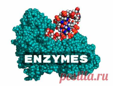 Энзимы для пищеварения — ТОП лучших препаратов
