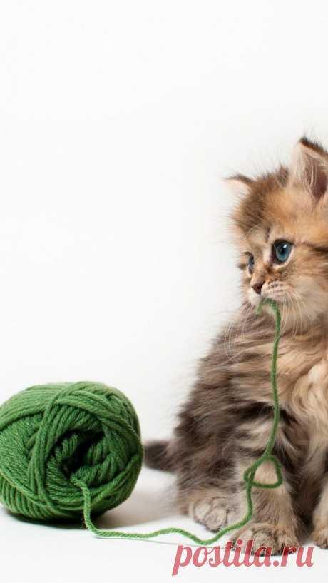 Beautiful Cat gallery | Take a Quick Break