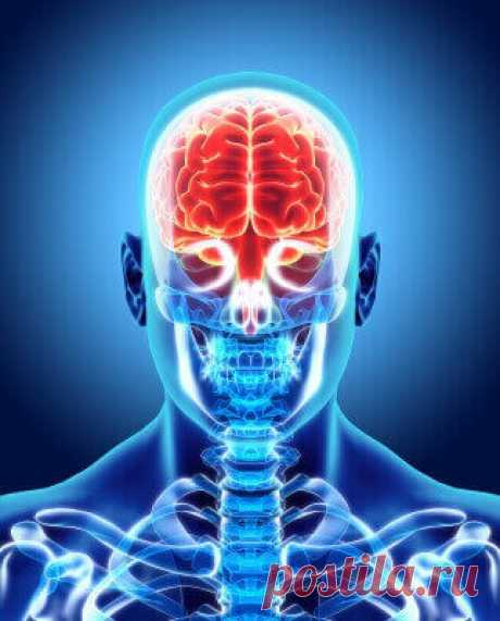 """6 продуктов для очищения сосудов головного мозга По каким признакам и состояниям организма можно судить о """"забитых"""" сосудах головного мозга. Какие продукты помогут их сохранить """"чистыми"""". Профилактика"""