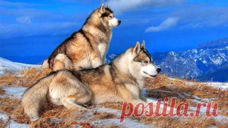 Охотничьи породы собак: список пород для охоты с фото и описанием