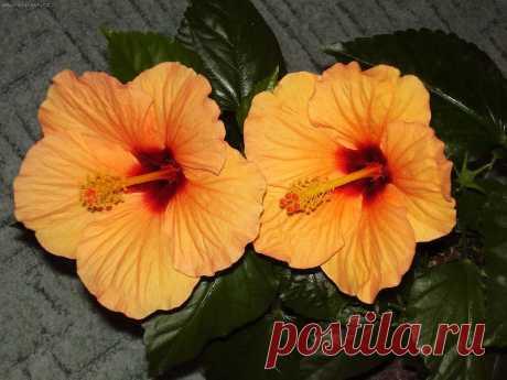 Биологические стимуляторы роста растений с вашей кухни