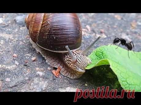 Улитка и муравей 🐌&🐜 - YouTube