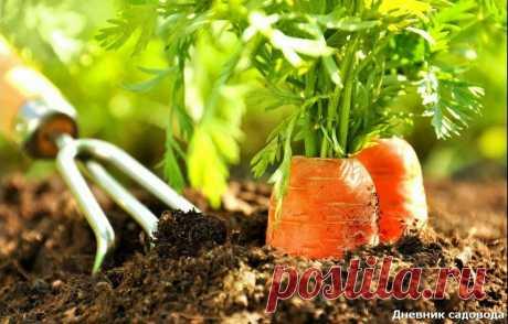Необычный способ посева семян морковки - без прореживания | Дневник садовода | Яндекс Дзен