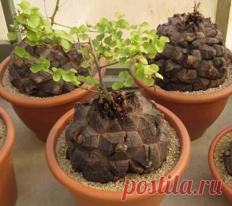 А вы знаете о цветке-черепахе? | Заметки природолюба | Яндекс Дзен
