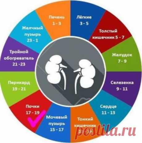 """El vaso de agua por horas \""""Yu-shi\"""" para la salud de los riñones \u000aDar de beber los riñones: 17.00-19.00 - las horas \""""Yu-shi\"""" \u000aEn este momento es activo el meridiano de los riñones. Debe aumentar la cantidad de la bebida para acelerar la deducción del organismo de las sustancias nocivas e innecesarias.\u000aEl agua ayuda ochist …"""