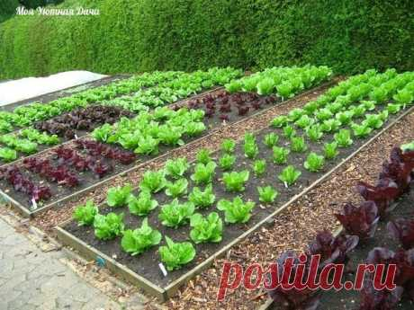 Полезная химия для сада и огорода