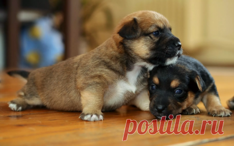 Сколько лет живут собаки? | Собакен today | Яндекс Дзен