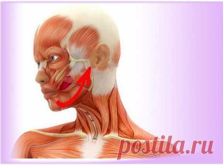 Упражнения, которые помогут стереть морщины и укрепить лицо / Все для женщины