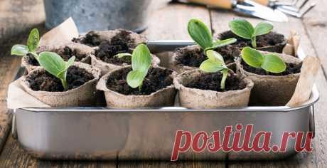 Как сеять семена цветов на рассаду