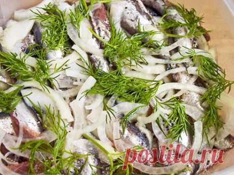Килька соленая в масле — Кулинарная книга - рецепты с фото