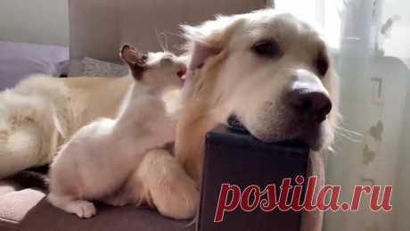 Пес и котенок лучшие друзья!
