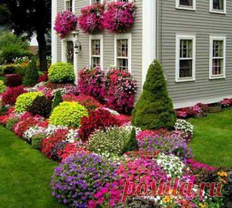 Делаем красивый миксбордер на даче(удлиненный цветник из смешанных растений)