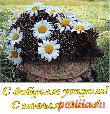 С Добрым утром, друзья! Пусть день будет наполнен солнцем и позитивом!