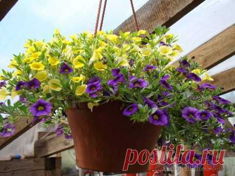 Составление земляных смесей для комнатных растений - Цветочки - медиаплатформа МирТесен