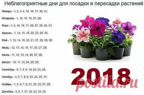 5 CONSEJOS DE ABUELA PARA LOS COLORES\u000d\u000a\u000d\u000aEl consejo 1.\u000d\u000aEn invierno y el otoño es necesario regar las flores por la mañana. El verano y la primavera – la tarde.\u000d\u000a\u000d\u000aEl consejo 2.\u000d\u000aRociar las flores es necesario por la mañana temprano o la tarde. En el pulverizador inundan el agua caliente, a la pulverización se enfría.\u000d\u000a\u000d\u000aEl consejo 3.\u000d\u000aEl secreto de la coloración brillante y jugosa de las hojas – en la rociadura con la adición del alcohol alcanforado. Aproximadamente 2-4 gotas a 1 litro del agua.\u000d\u000a\u000d\u000aEl consejo 4.\u000d\u000aLa fertilización de las plantas de salón. Existe cuanto abonos de todo género y los consejos de ellos primen...