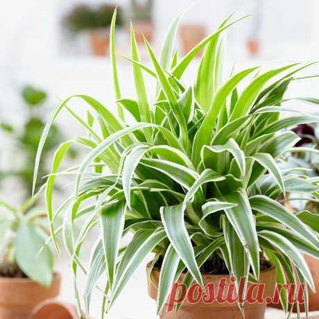 7 частых ошибок, которые губят ваши комнатные растения | Огород на подоконнике | Яндекс Дзен
