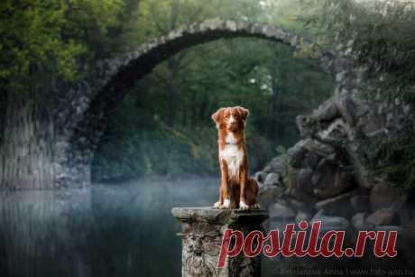 «Cerca del puente místico». El puente Rakottsbryuke en Alemania. El autor de la foto – Anna Averyanova: nat-geo.ru\/photo\/user\/296624\/