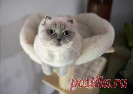 Кошки не просто так любят коробки — они намекают, что хотели бы жить в отдельных апартаментах. И пусть снаружи кошачьего дома шум, детский крик и квартира в ипотеку, внутри хвостатый домовладелец сам себе хозяин. Быть главным — вообще основная жизненная позиция кота. Расскажем и покажем самые
