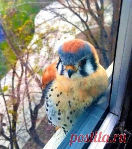 Неожиданный гость за окном ... :)))