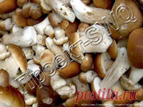 Любимые белые грибы.И снова прямо дома