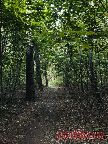 Как лучше фотографировать лес и какие ошибки при съёмке могут быть | Фото - это легко! | Яндекс Дзен