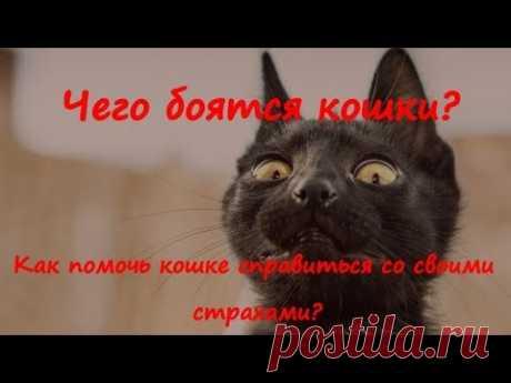 ЧЕГО БОЯТСЯ КОШКИ   WHAT ARE CATS AFRAID OF  Как помочь кошке справиться со своими  страхами?