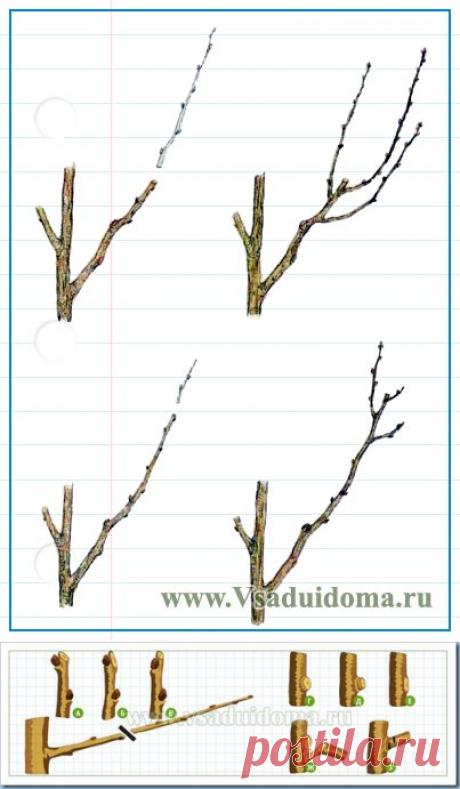 Как правильно сделать обрезку плодовых деревьев в саду–виды и схемы | Сайт о саде, даче и комнатных растениях.