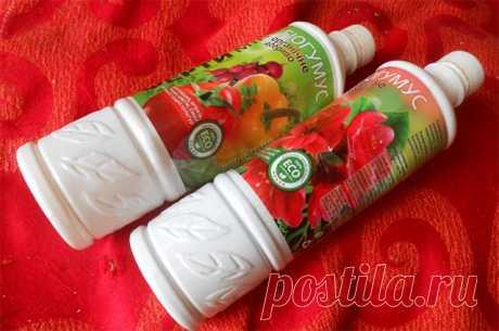 Настой яичной скорлупы для подкормки рассады овощей и цветов - Блог счастливых женщин