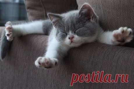 Идеальное утро: проснулся, потянулся, улыбнулся, перевернулся и снова заснул!