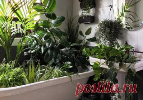 7 хитростей, как поливать комнатные растения, когда дома долго никого нет