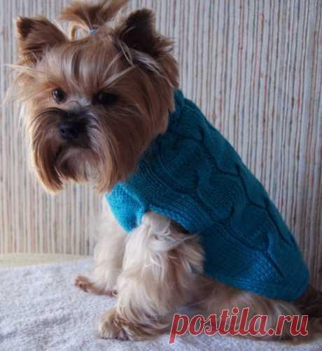 Описание вязание свитера-безрукавки для маленькой собачки (Elenatricoter)
