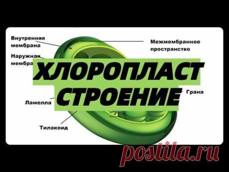 ХЛОРОПЛАСТ СТРОЕНИЕ ФУНКЦИЯ фотосинтез егэ (граны,тилакоиды,строма) урок ЕГЭ ОГЭ