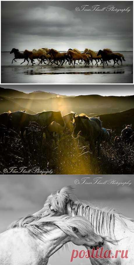 Сказочно прекрасные лошади от Тины   Живой фотоблог