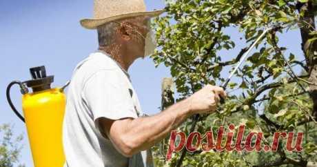 Календарь обработки сада от болезней и вредителей План защитных мероприятий в саду.