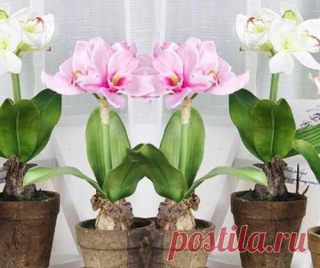 El secreto del florecimiento lujoso de las plantas de salón