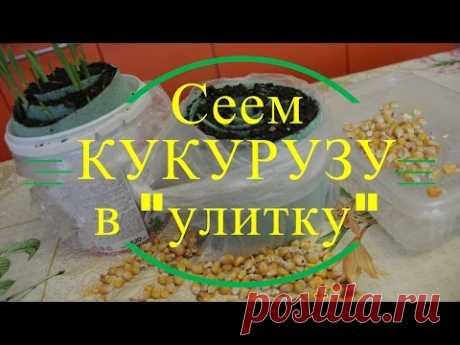 """Сеем кукурузу в """"улитку"""". - YouTube"""