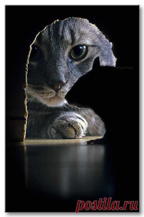 Cat & Rat by Jeff Morgan