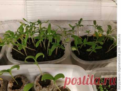 Как я выращиваю рассаду овощей и цветов