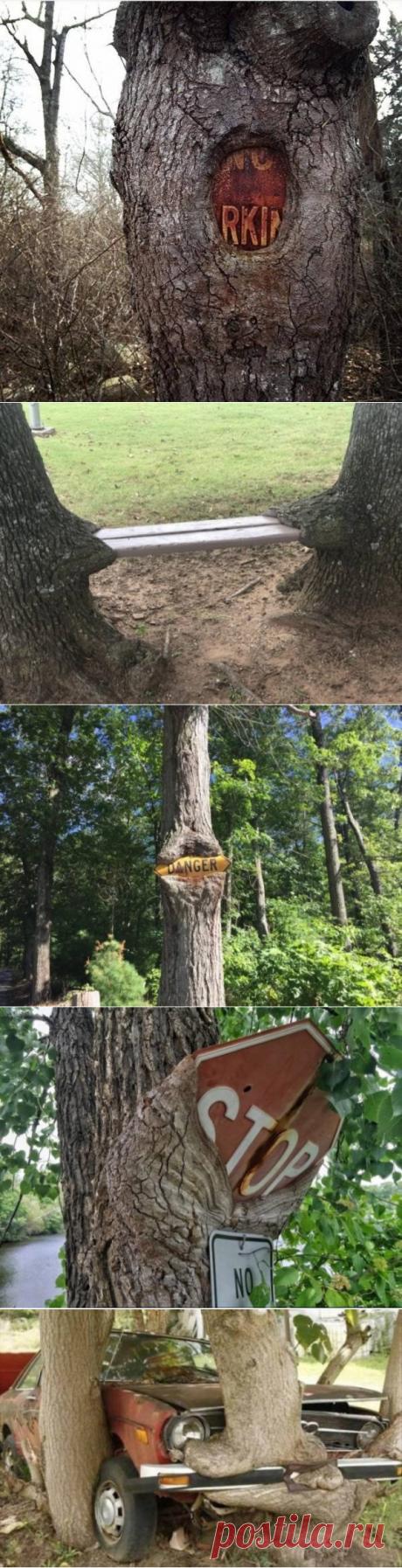 Как деревья поглощают всё вокруг « бгежикмортфцшъью.рф
