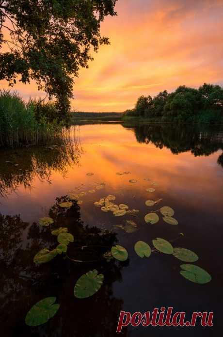 Река Медведица, Тверская область. Автор фото — Кирилл Волков: nat-geo.ru/photo/user/299588/