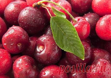 ...Лето пахнет спелой вишней, и малиною в саду... Тёплым дождиком игривым, и осокой на пруду...