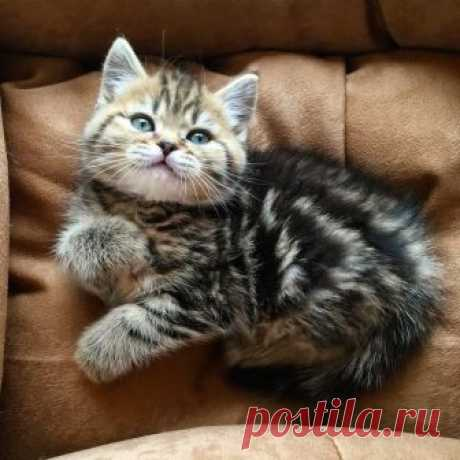 - Котик, кто тут плюшевая булка? -