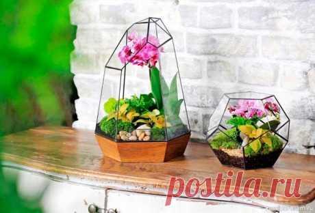 Как выращивать суккуленты в вазе или аквариуме Украшение интерьера кактусами,  помещенными в стеклянные ёмкости, сегодня невероятно популярно.  Флорариум с суккулентами не требует особого ухода, является своего рода  изюминкой помещения. Закрытые банки создают оптимальный микроклимат для  капризных тропических растений – тепло и...