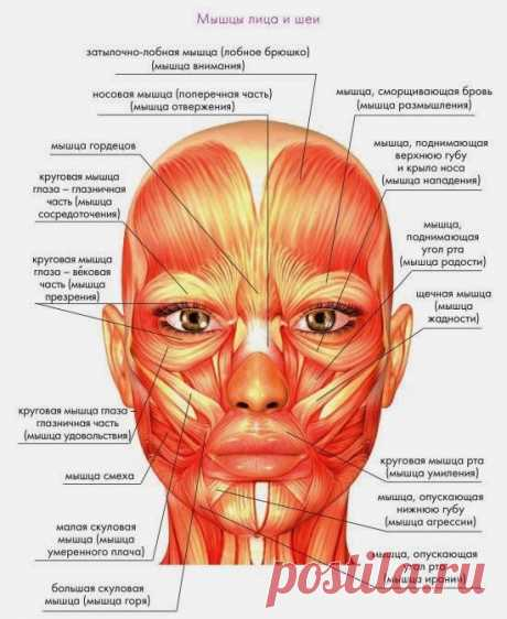 Тейпирование лица - схемы, рекомендации и эффективность
