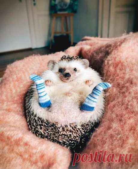 Забавные животные (15 фото) - Нет скуки.ру - Подборка фотографий с милыми забавными зверятами. Хорошего настроения от просмотра подборки.