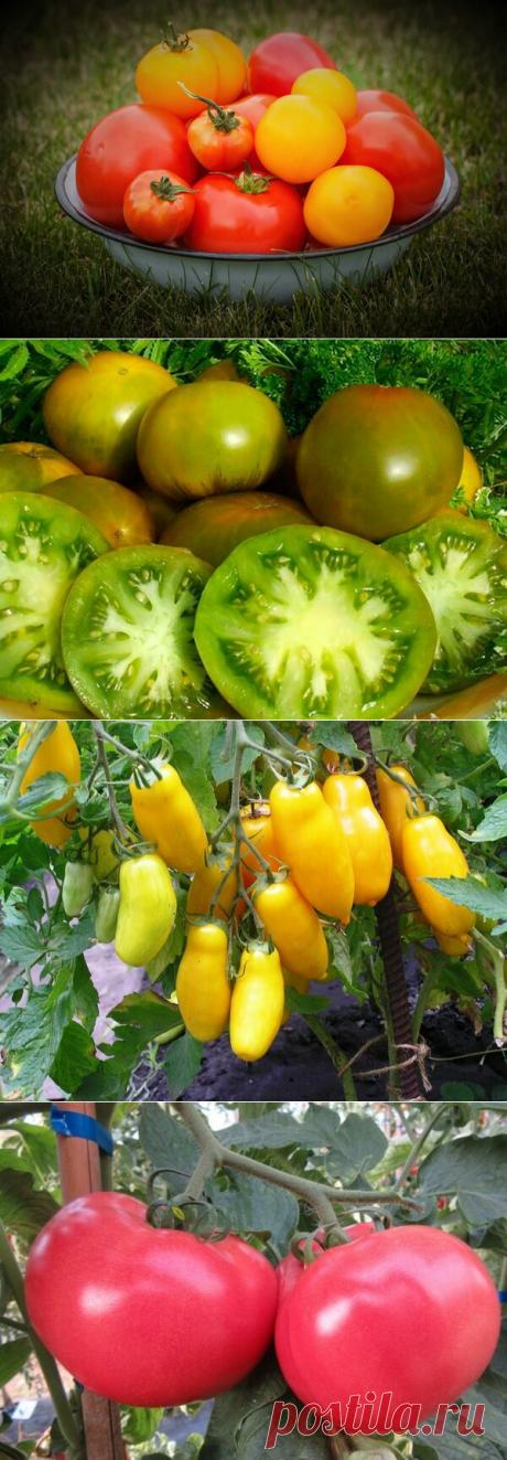 Ароматные сорта помидор, которые я посажу и на следующий год обязательно! | Идеи для дома и окружения | Яндекс Дзен