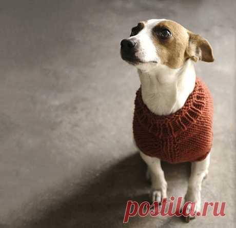 Как связать свитер для собаки спицами