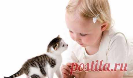 Семейные животные. Кошка и ребенок. Заводить либо нет кошку. Ребенок просит покупать кошку.