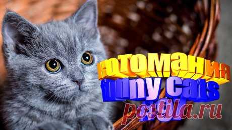 Любите смотреть видео про смешных котов? Тогда мы уверены, Вам понравится наше видео 😍. Также на котомании Вас ждут: видео кот,видео кота,видео коте,видео котов,видео кошек,видео кошка,видео кошки,видео о котах, видео приколы, видео смешных кошек, говорящие коты, коты, кошек смешные, прикол, приколы о кошек, про кошек смешное до слез, ролики про животных, смешное, смешные видео про кошек, смешные приколы про животных, смешных котиков, смотреть смешные коты, приколы о котах